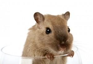 Lebensqualität Maus